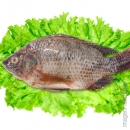 TILAPIA LIMPA (CLEANED) 450G-550G☆